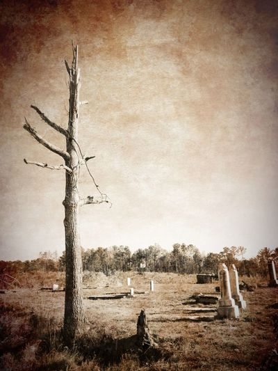 Tornado tree in a cemetery near Lake Martin