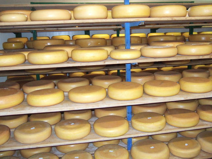 cheese dairy