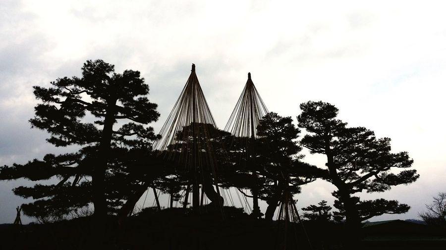 2014日本石川县金泽市三大名园之一兼六园Kenroku-en,a strolling-style landscape garden counted as one of the three noted gardens in Japan Sky Tree Low Angle View Outdoors No People Day Cloud - Sky Built Structure Architecture Nature