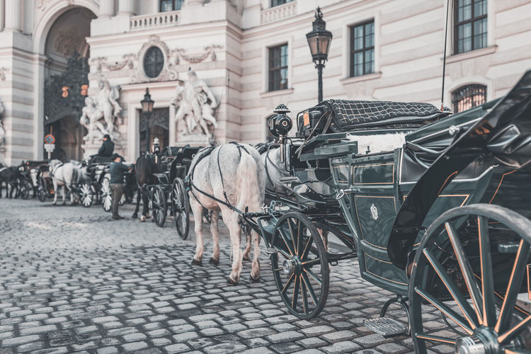 "Horse drawn carriages ""Fiaker"" in front of Imperial Palace ""Hofburg"" and Spanish Riding School City Building Exterior Built Structure Architecture Hofburg Hofburg Palace Imperial Spanish Riding School  Fiaker Hackney Cab Hackney Coach Horse Drawn Carriage Vintage Cobblestone Animal Horses Vienna Vienna_city Vienna, Austria Tourist Attraction  Tourist Destination Travel Streetphotography Street Scene Vienna Tourism Austria Tourism"