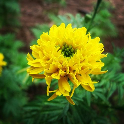 ดอกไม้ ^ ^ ?? First Eyeem Photo