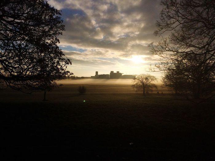 Misty York racecourse Mist Tree Sky Nature Tranquility Landscape No People Outdoors Morning Light Sunrise Winter