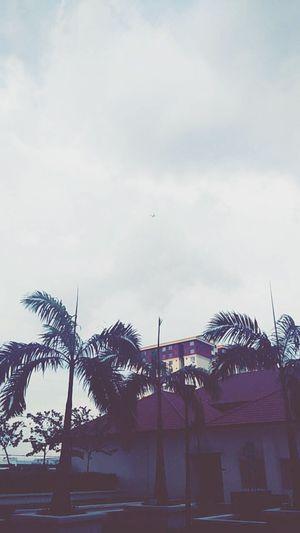 Photos Around You Taking Photos 😚 ✈ Evening Walk Aeroplane In The Sky Skyporn Coconut Trees Beautiful Nature Peaceful