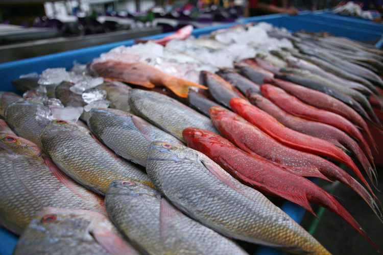 Backpacking Borneo Kota Kinabalu Travel Close-up Filipino Market Fish Food Food And Drink For Sale Freshness Healthy Eating Malaysia Market Market Stall Night Food Market Raw Food Retail  Seafood Tourist Destination