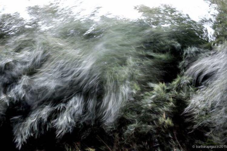 Disquiet Movement 02 Nature Levent Bulb Canon1dx Studio83 Barbara Pigazzi
