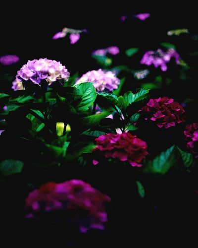 Secret Garden Hello World Light And Shadow Hydrangea EyeEm Nature Lover Flowers Traveling Travel Photography Taking Photos