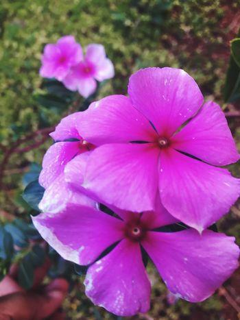 🌷 Flower Nature Lovely