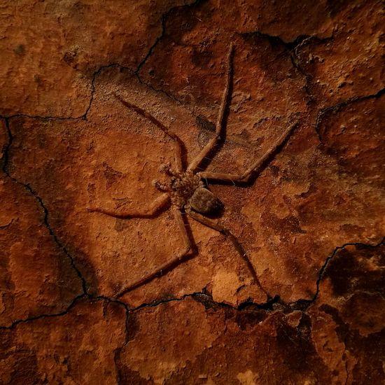 Spider camouflage First Eyeem Photo Huawei P9 Leica HuaweiP9Photography HuaweiP9 Huawei P9. Huaweip9photos Huawei P9 Photos Huaweiphotography