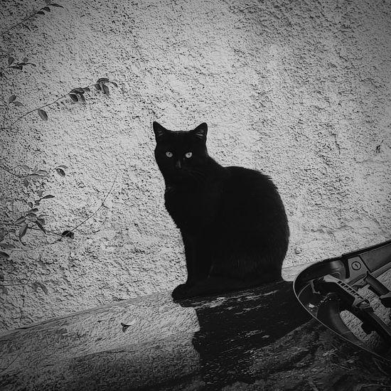 Cats of Tirana
