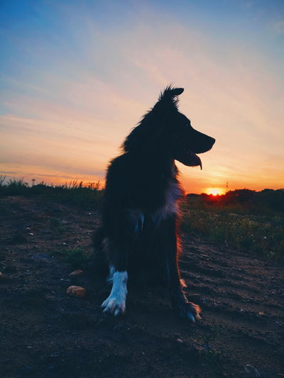 Silhouette dog on field during sunset
