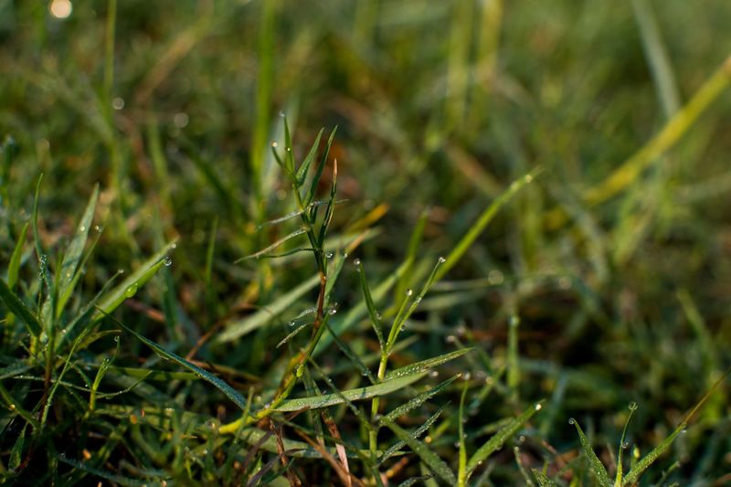 Plant Animal Wildlife Invertebrate Insect Animals In The Wild One Animal Green Color Close-up Day Animal Animal Themes Grass Growth No People Land Nature Selective Focus Outdoors Beauty In Nature Focus On Foreground