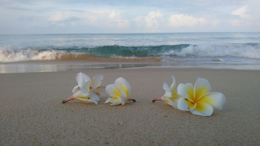 Flowers in the sea Water Wave Sea Beach Sand Sky Horizon Over Water Floating In Water Swimming Black Swan Mallard Duck