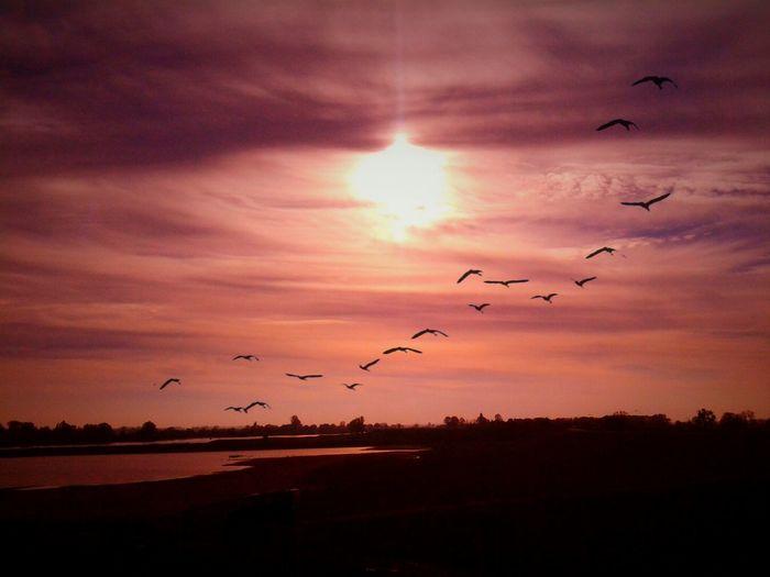 Sunset Silhouettes Zonsondergang Dutch Landscape Dutch Dreamscapes Hollandse Luchten Open Edit