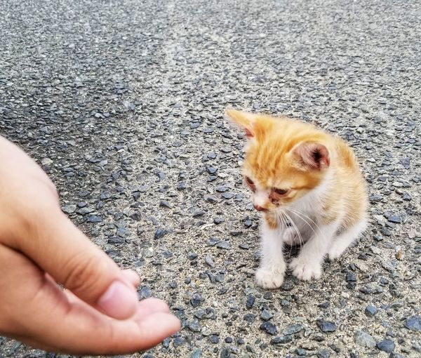 High angle view of hand holding cat