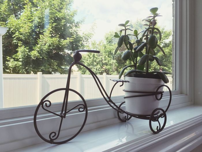 BikePot Best EyeEm Shot Market EyeEm Gallery Still Life Pretty Decoration Photooftheday Photo Amazing Beautiful Green Indoors  Design Plant Transportation Growth Tree Land Vehicle No People Bicycle Window Stationary Potted Plant Green Color Architecture