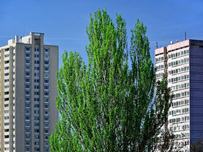 Green between the buildings Apartment Architecture Building Building Exterior Built Structure City Day Green Color Growth Modern Nature No People Outdoors Plant Residential District Sky Skyscraper Sunlight Tree Window