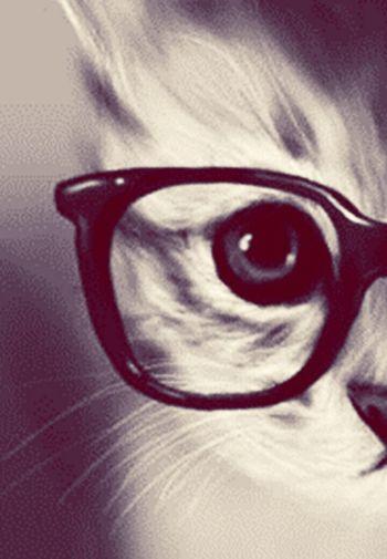 My eye cat Cheese!