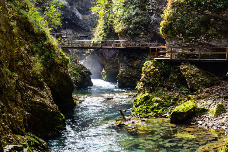 Vintgar Gorge Water Motion Rock Tree Bridge Rock - Object Forest Flowing Water Scenics - Nature Solid Connection Nature Day Waterfall Bridge - Man Made Structure Built Structure Beauty In Nature No People River Flowing Outdoors Power In Nature