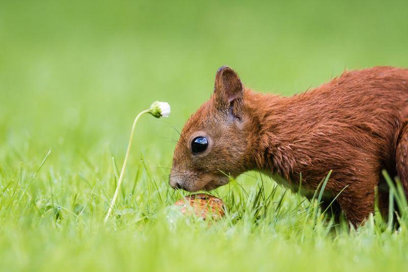 mmmhhhh wie das duftet 😊 Squirrel One Animal Pumuckl Eichhörnchen Nature Beauty In Nature Selective Focus Close-up Animals In The Wild Focus On Foreground Animal Themes Animal Wildlife Nuts Germany Flensburg Grass Garden