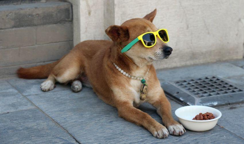 Dog Wearing Sunglasses On Footpath