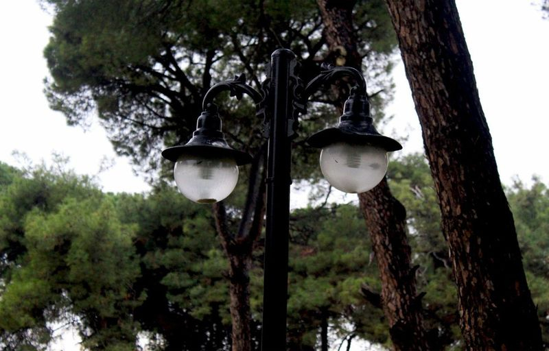 Low angle view of street light against trees in forest