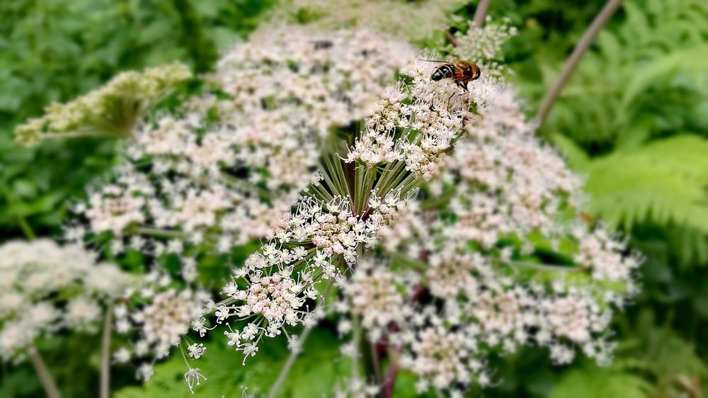 One Insect Insect No People Selective Focus Close-up Plant Day Nature Outdoors Beauty In Nature Plantsandflowers Green Plant Colour Green