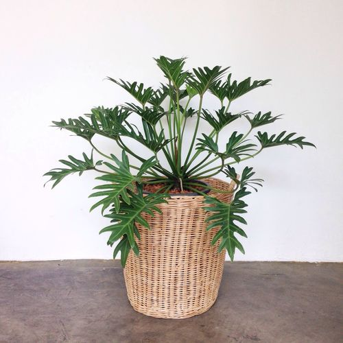 Growth Plant Potted Plant Leaf No People Nature Green Color Indoors  Day Close-up