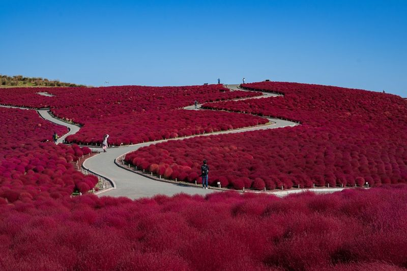 The red carpet. Red Clear Sky Sky Nature Real People Blue Plant Land Group Of People People Copy Space Field Crowd Landscape Day High Angle View Unrecognizable Person Outdoors Environment