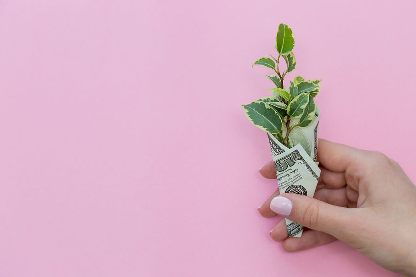 a green plant is wrapped in a hundred-dollar bill on a pink background Sprout Girl Female Hands Holding Business Life Plant Prosperity Revenue Rich Wages Wrap Abundance Background Colorful Copy Space Dollar Dollars Earnings Finance Financial Income Investment Leaf Money Profit Success Wealth Wrapped