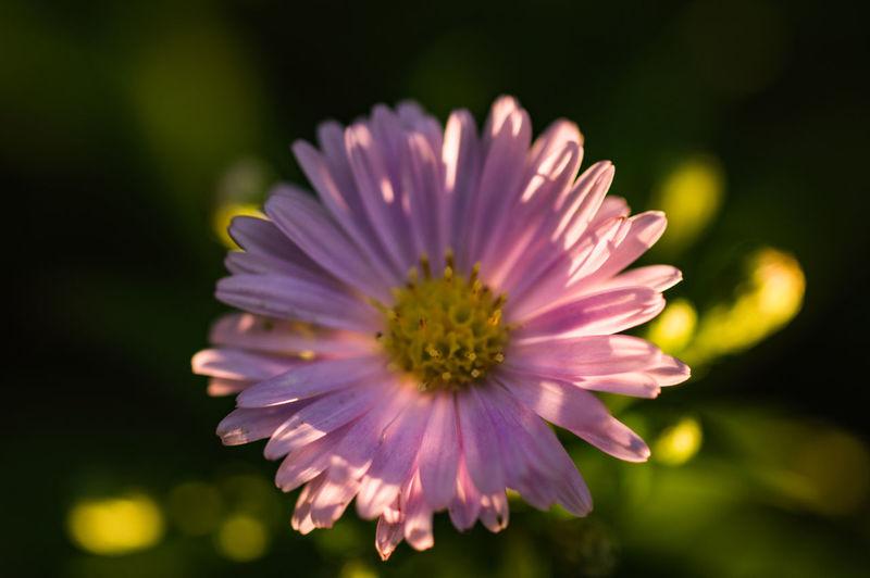 SONY DSC Flower