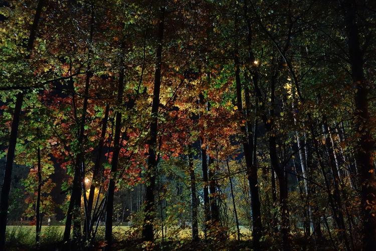 200 Autumn