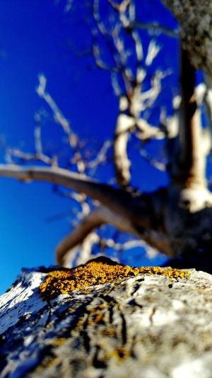 PhonePhotography Asus Zenfone Photography Travel Photography Santorini Trees And Sky Focus Blue Close-up Sky Bare Tree
