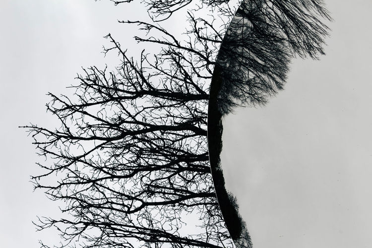 Tree Bare Tree Plant Sky Low Angle View Branch Nature No People Tranquility Trunk Day Tree Trunk Clear Sky Outdoors Growth Beauty In Nature Silhouette Scenics - Nature Tranquil Scene Non-urban Scene Mirror Reflection