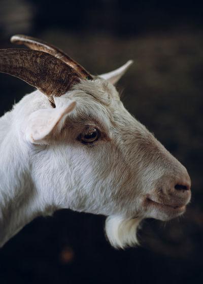 Close-up portrait of a white horse