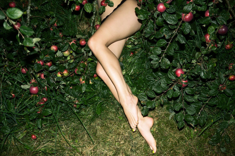 Low Section Of Woman Lying In Apple Trees