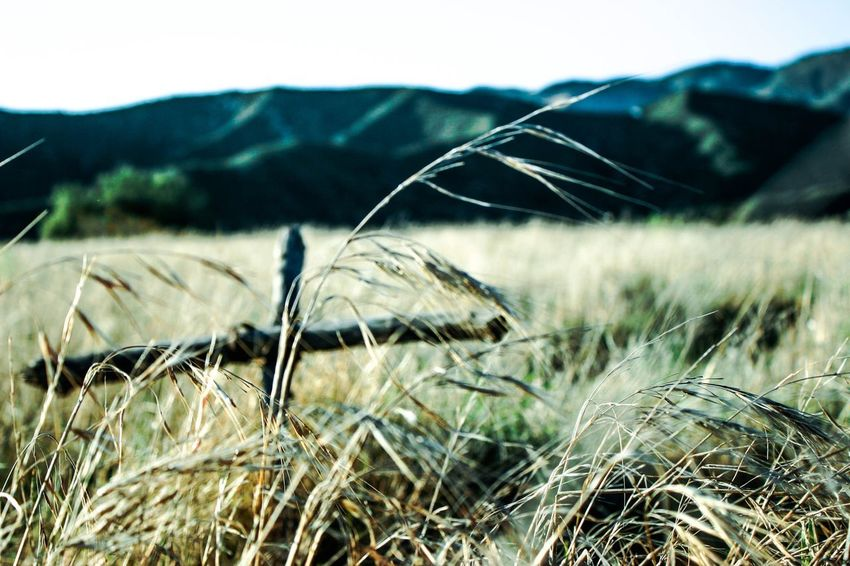 Passage of time EyeEmNewHere Focus On Foreground Field Growth Plant Nature Beauty In Nature Close-up Tranquility Environment Mountain Landscape Grass Rural Scene No People