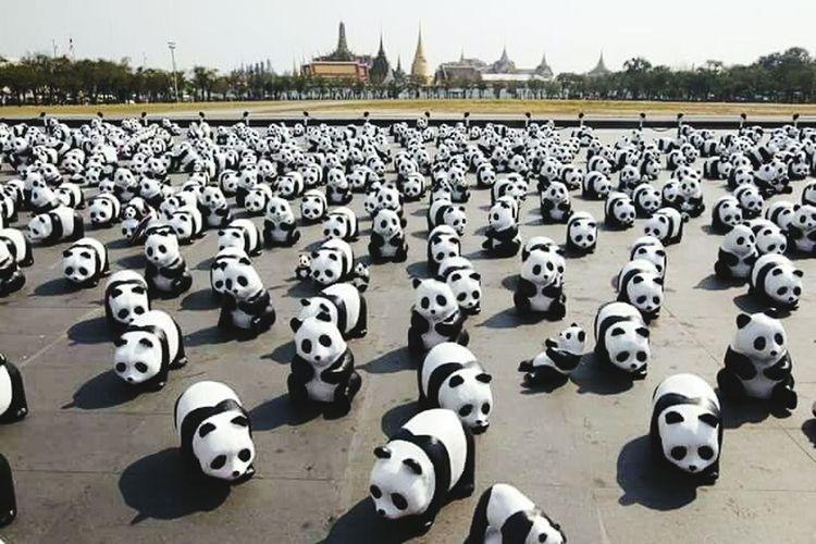 Enjoy Ittt... cute Pandas.. Thailand...