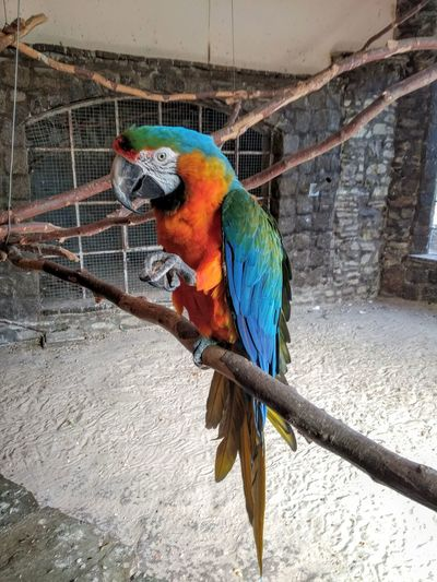 View of a bird perching in cage