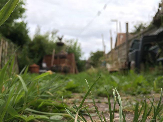 Garden Grass weeds Green