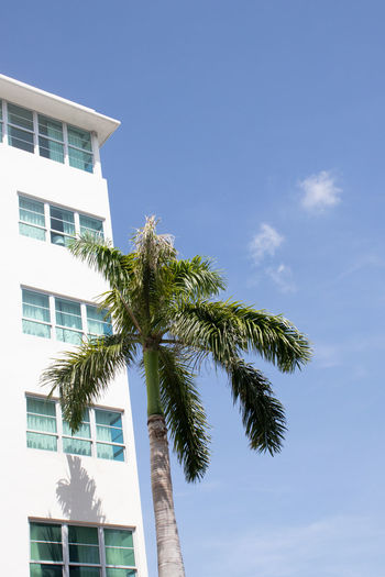 Architecture Blue Building Building Exterior Built Structure Cloud - Sky Day Green Color Growth Low Angle View Nature No People Outdoors Palm Tree Plant Sky Sunlight Tree Tropical Climate