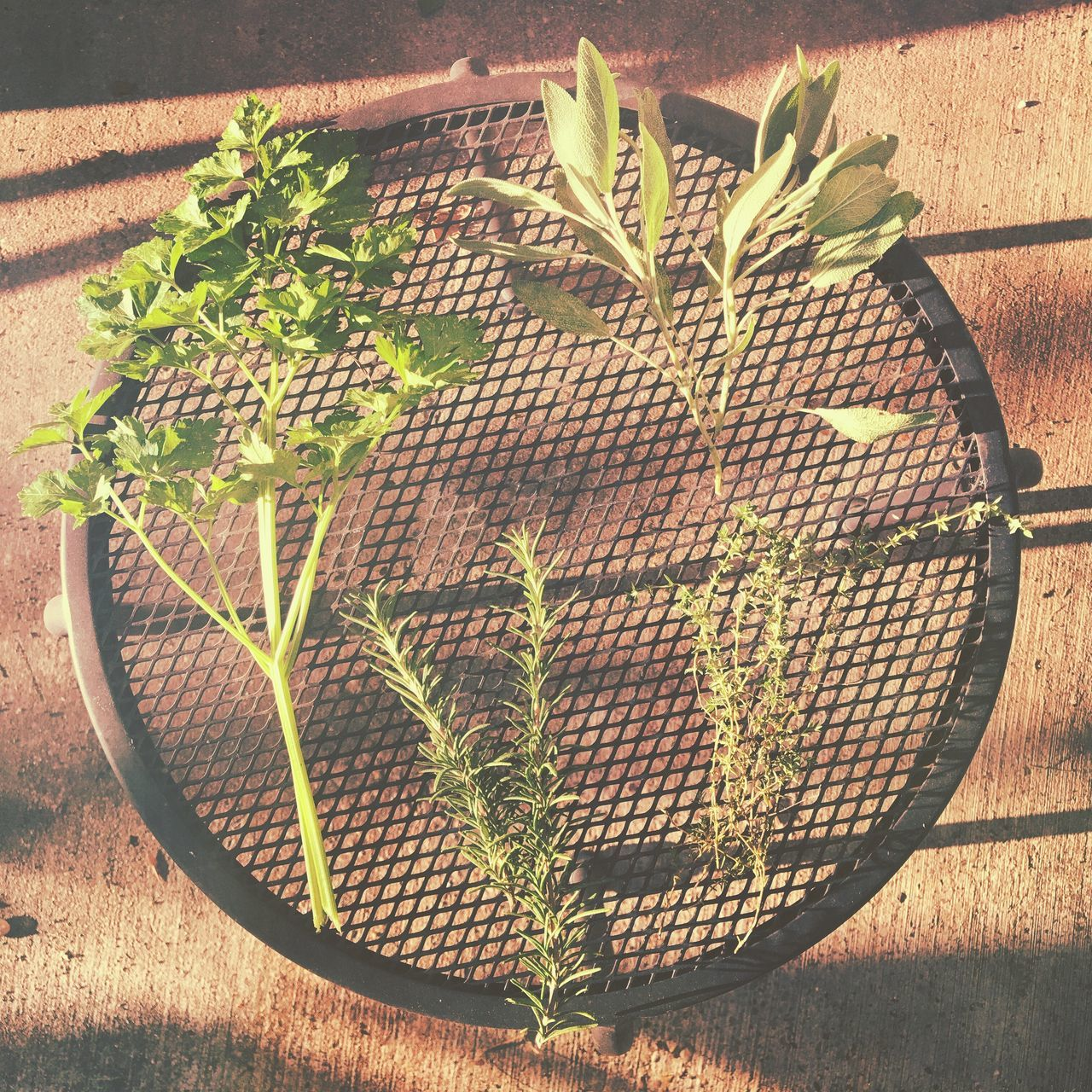 growth, plant, potted plant, no people, high angle view, leaf, green color, outdoors, day, basket, table, nature, sunlight, freshness, close-up