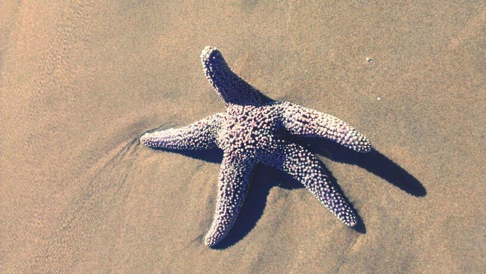 saw a starfish at the beacj