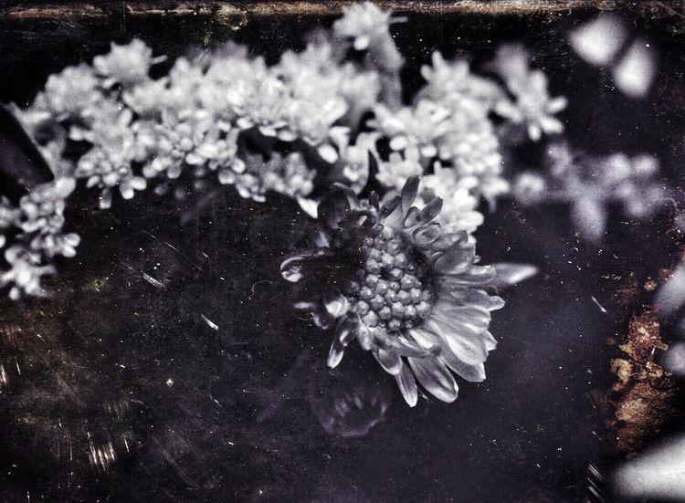 Meditation in Negative Sony A6000 Digitalphotography Holgalens Mextures Flowers Blackandwhite Photography Arizona
