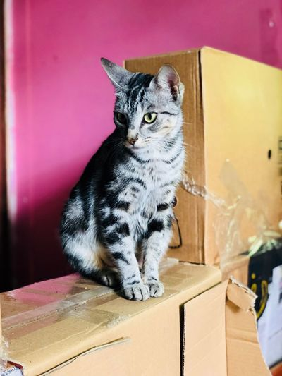 Twin Cam Color Colour Pink Cat Feline Animal Themes Pets Mammal One Animal Animal Domestic Cat Domestic Vertebrate Domestic Animals Box Cardboard Indoors  Cardboard Box Box - Container No People Whisker Close-up Container