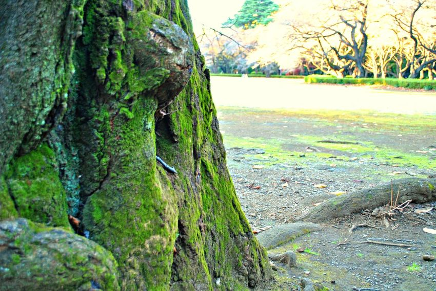 Beauty In Nature Close-up Day Grass Growth Nature No People Outdoors Sky Tree Tree Trunk
