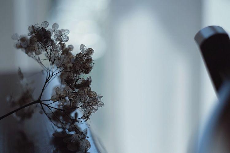 Q Everything In Its Place EyeEm Stillife StillLifePhotography Showcase March EyeEm X Audi - Letter Q