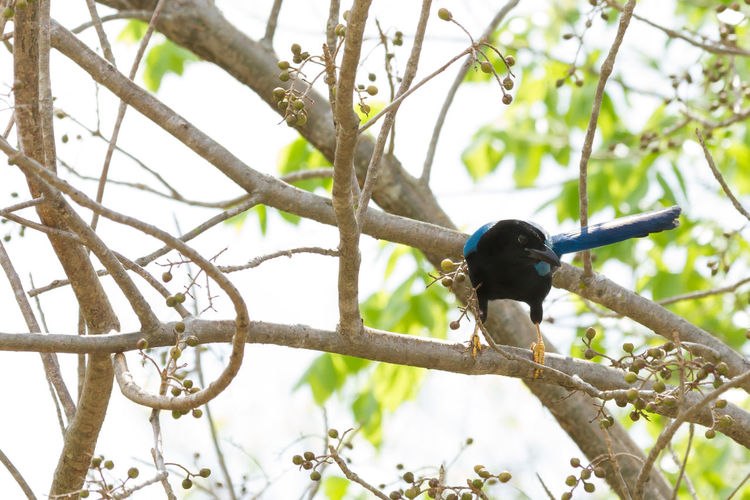 Low angle view of bird perching on branch.