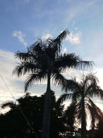 The view Bird