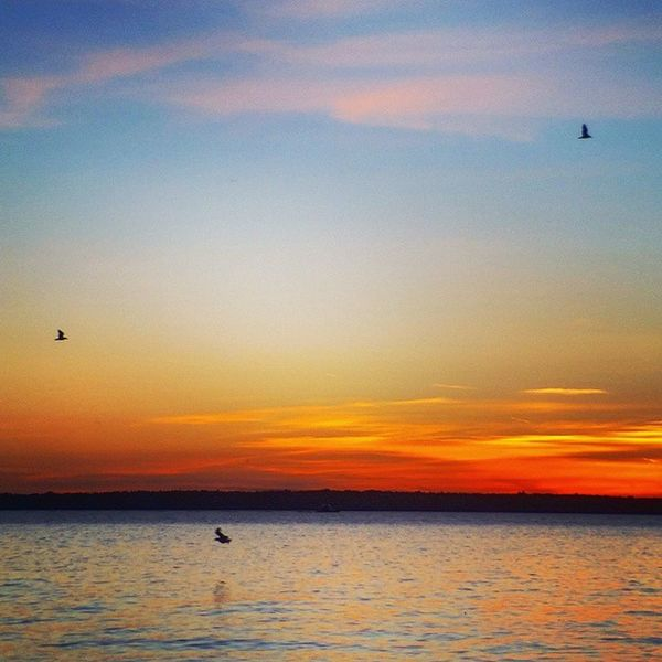 birds at sunset Mentorseries Makemoments Igers_seattle Igers_seattle_tuesdaychallenge