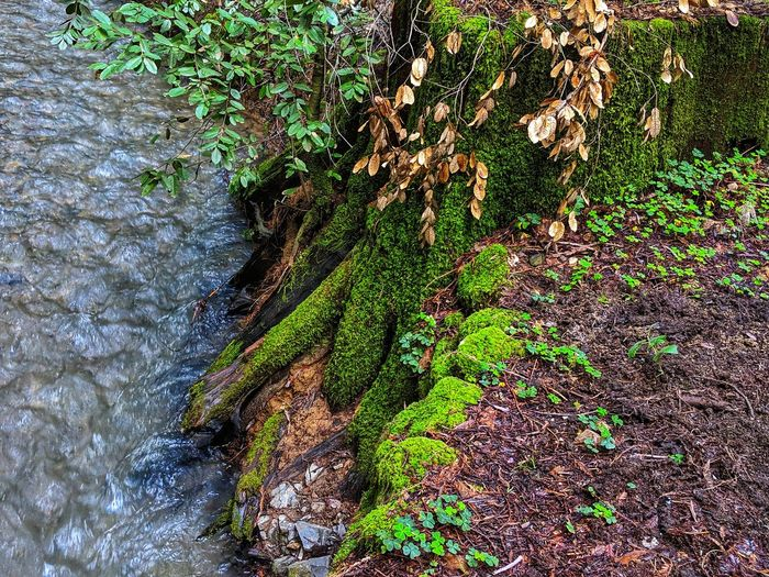 Rivers edge. Nature's mosaic. River Stream Flowing Movement Mosaic Background Nature Background Vertical Ripples Water Tree Backgrounds Full Frame Close-up Green Color Plant Growing Creeper Leaves Fungus Branch Calm Rippled Ivy Foreground